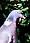 Wood Pigeon (England)