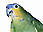 Pedrinho (Parrot)