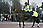 Police Officer on Horse Back, Change of the Guard Parade, Buckingham Palace, London