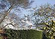 Seagull in a garden