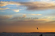 Seagulls in Sunset in Walberswick, Sizewell  B in background, England