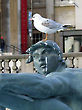 Seagull on top of statue, Trafalgar Square, London, England